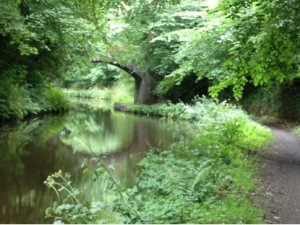 Mark's canal pic